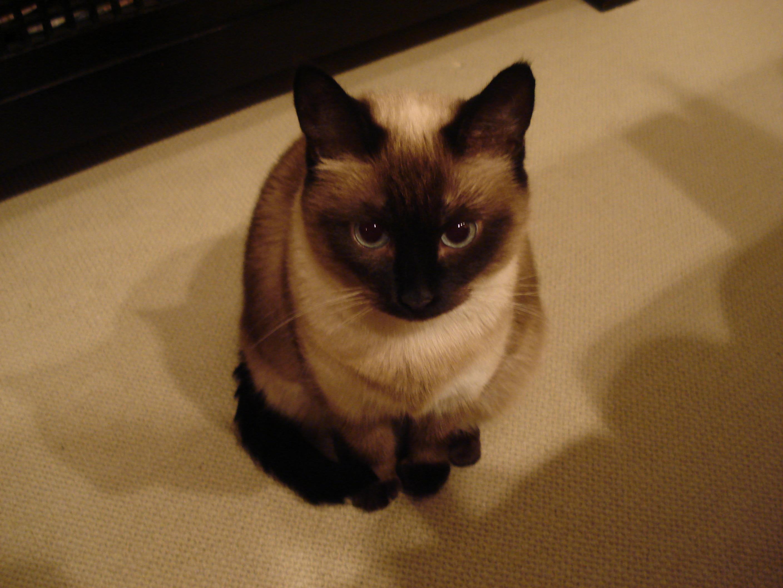 Spooked Cat Gif Fujimiwa